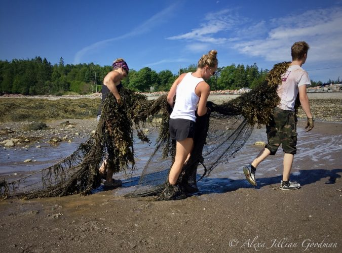 Alexa Goodman, Ghost net removal at Ministers Island, St. Andrews NB, August 2018